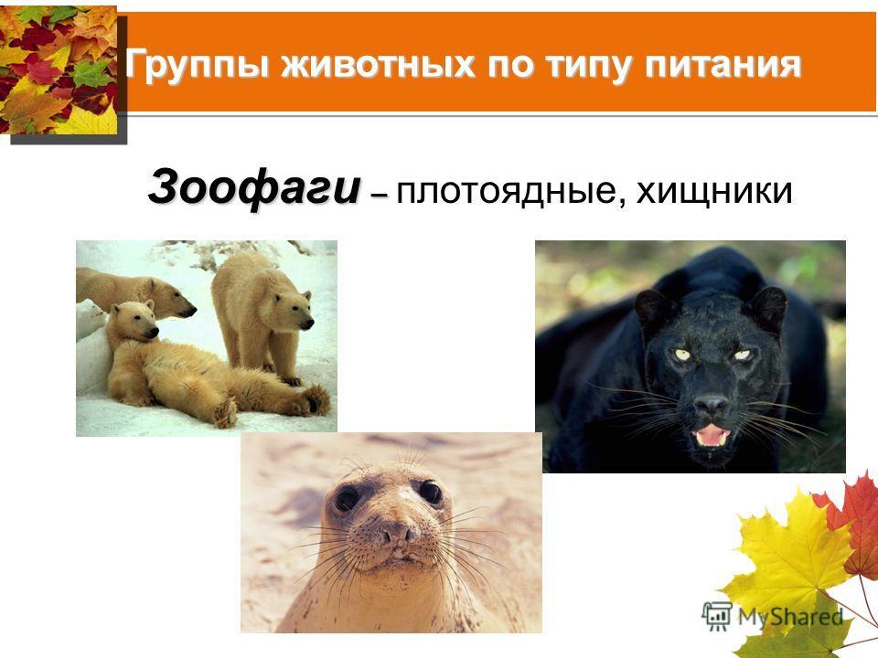 Группы животных по типу питания Зоофаги – Зоофаги – плотоядные, хищники