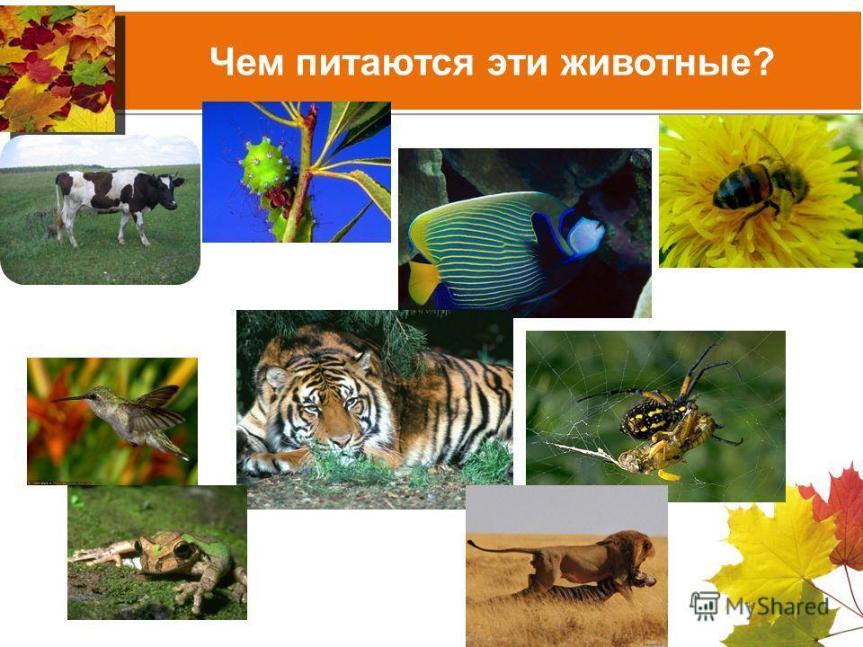 Чем питаются эти животные?
