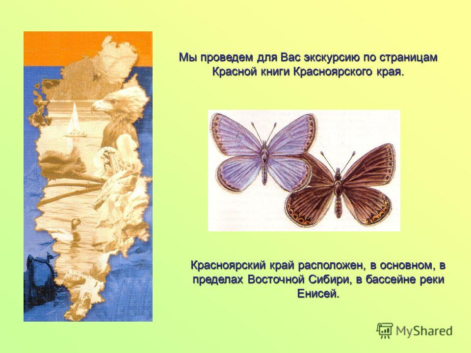 Мы проведем для Вас экскурсию по страницам Красной книги Красноярского края. Красноярский край расположен, в основном, в пределах Восточной Сибири, в бассейне реки Енисей.