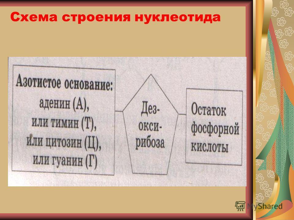 Схема строения нуклеотида
