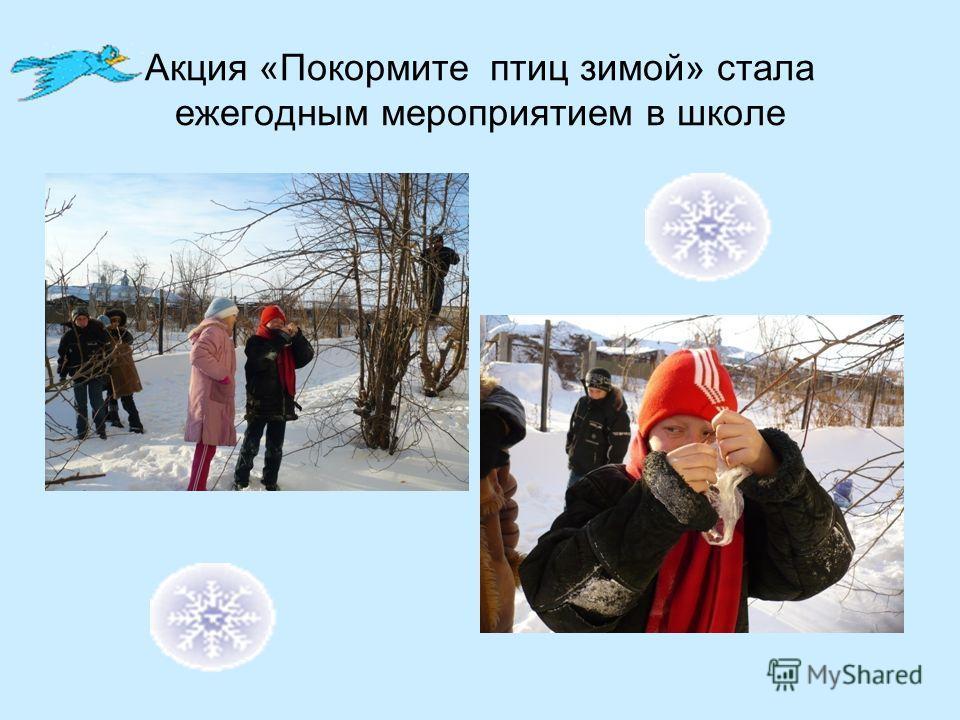 Акция «Покормите птиц зимой» стала ежегодным мероприятием в школе