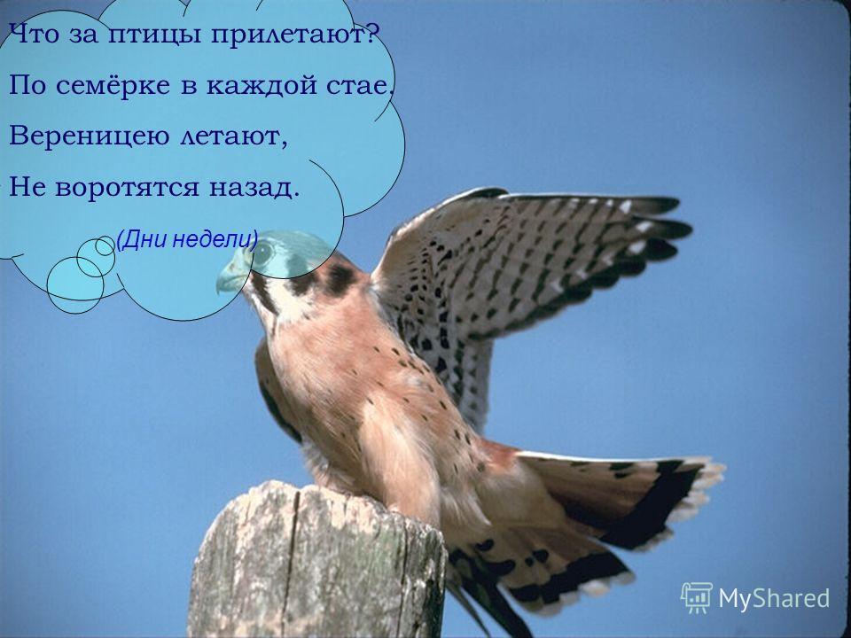 Что за птицы прилетают? По семёрке в каждой стае. Вереницею летают, Не воротятся назад. (Дни недели)