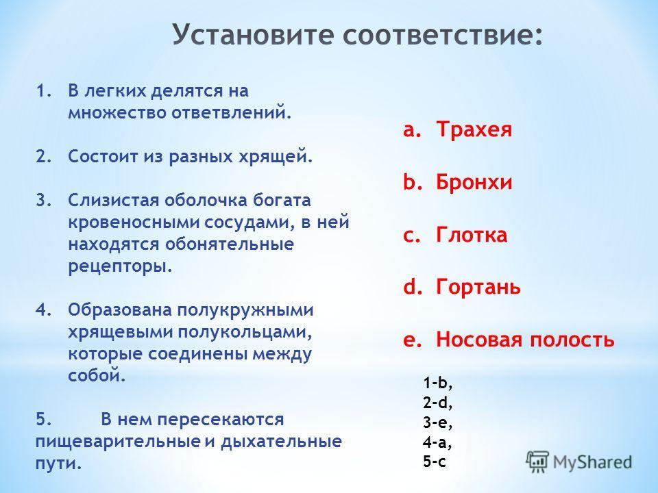 1. В легких делятся на множество ответвлений. 2. Состоит из разных хрящей. 3. Слизистая оболочка богата кровеносными сосудами, в ней находятся обонятельные рецепторы. 4. Образована полукружными хрящевыми полукольцами, которые соединены между собой. 5
