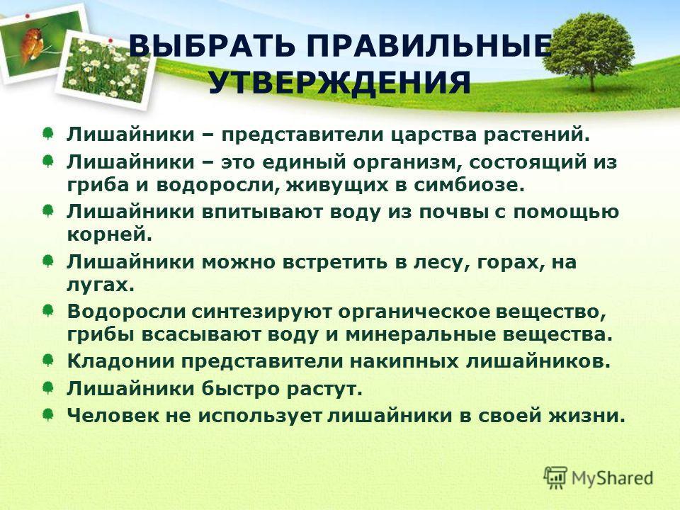 Лишайники – представители царства растений. Лишайники – это единый организм, состоящий из гриба и водоросли, живущих в симбиозе. Лишайники впитывают воду из почвы с помощью корней. Лишайники можно встретить в лесу, горах, на лугах. Водоросли синтезир