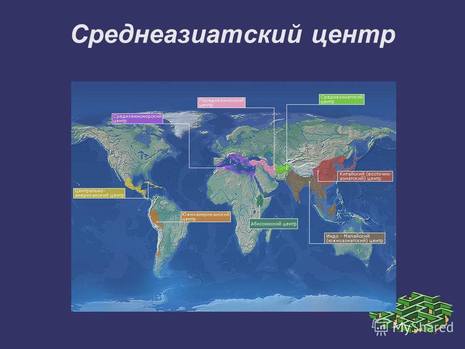 Среднеазиатский центр