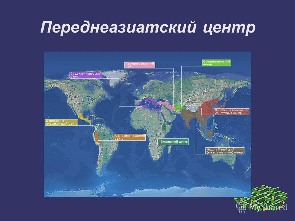 Переднеазиатский центр