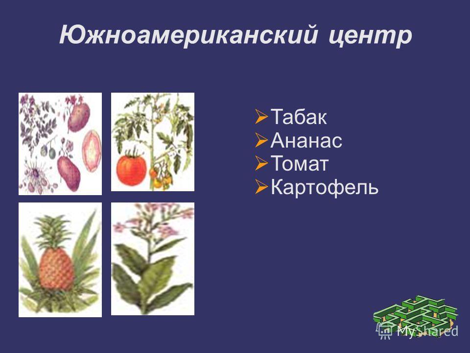 Табак Ананас Томат Картофель