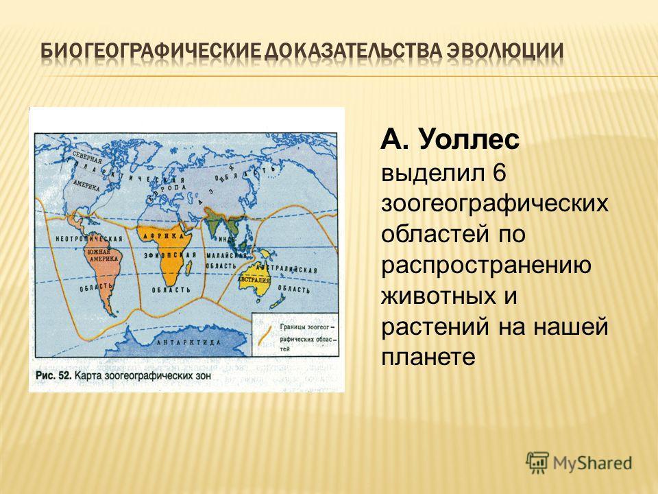 А. Уоллес выделил 6 зоогеографических областей по распространению животных и растений на нашей планете