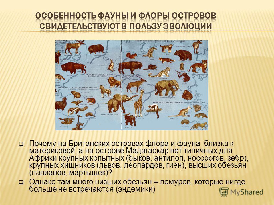 Почему на Британских островах флора и фауна близка к материковой, а на острове Мадагаскар нет типичных для Африки крупных копытных (быков, антилоп, носорогов, зебр), крупных хищников (львов, леопардов, гиен), высших обезьян (павианов, мартышек)? Одна