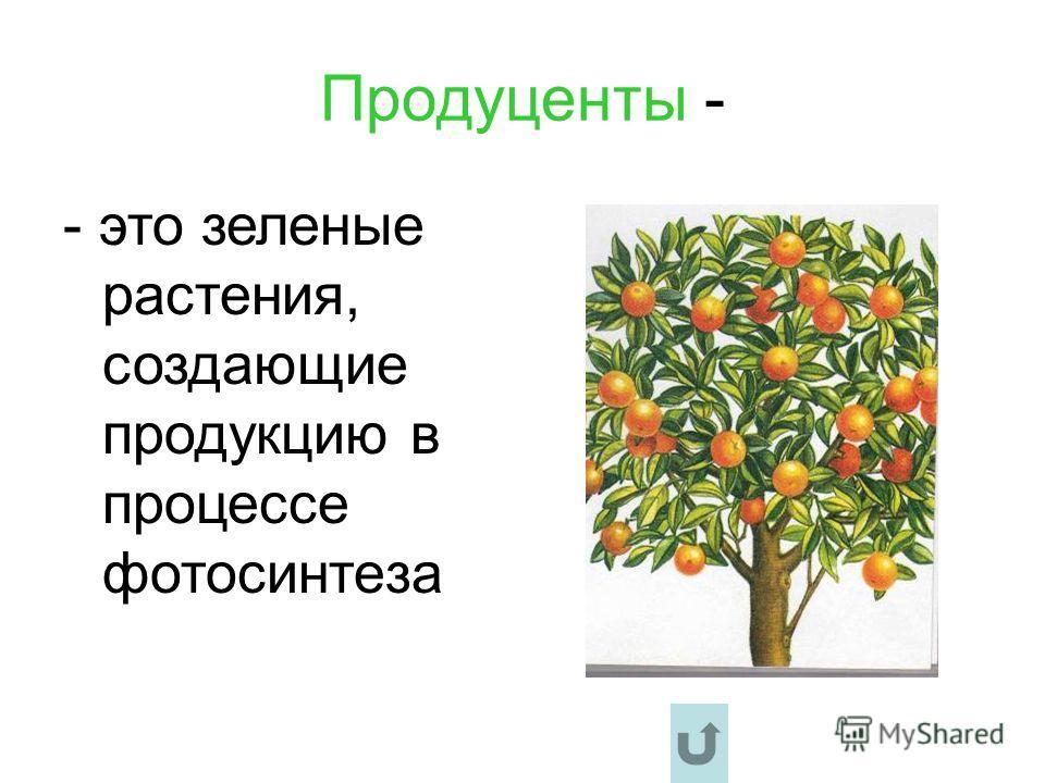 Продуценты - - это зеленые растения, создающие продукцию в процессе фотосинтеза