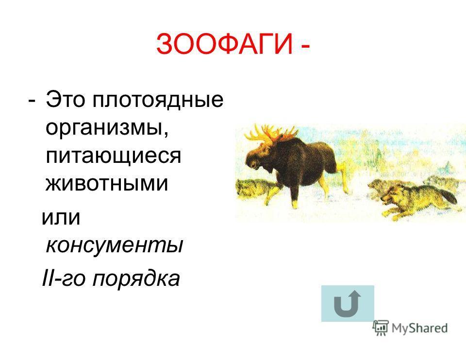 ЗООФАГИ - -Это плотоядные организмы, питающиеся животными или консументы II-го порядка