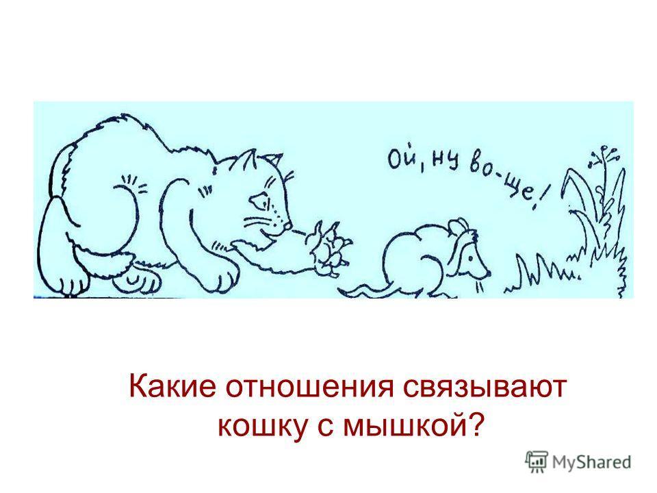 Какие отношения связывают кошку с мышкой?