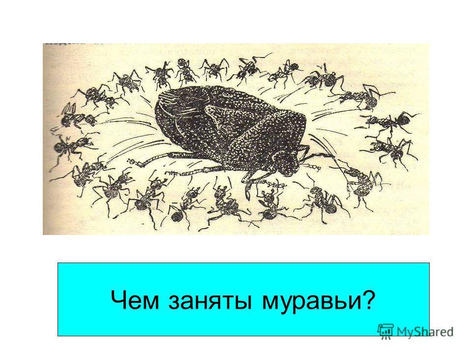 Чем заняты муравьи?