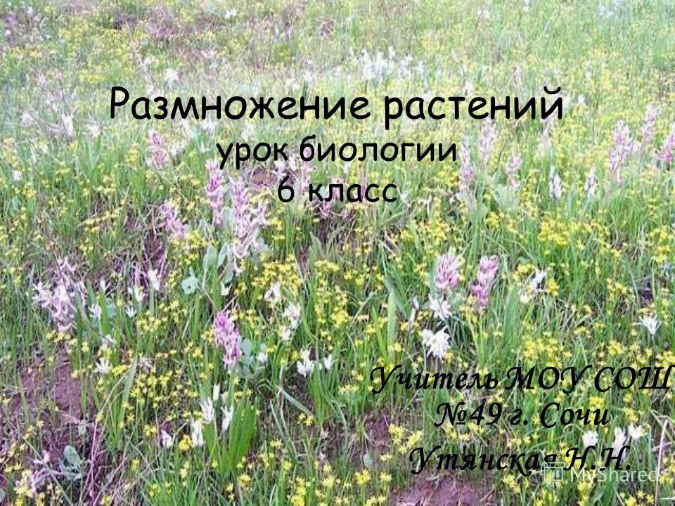 Размножение растений урок биологии 6 класс Учитель МОУ СОШ 49 г. Сочи Утянская Н.Н.