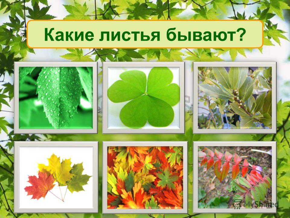 Какие листья бывают?