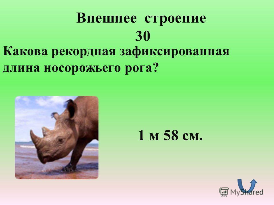 Внешнее строение 20 Кто из зверей самый толстокожий? Нильский бегемот. Толщина его кожи составляет 2,5 см.