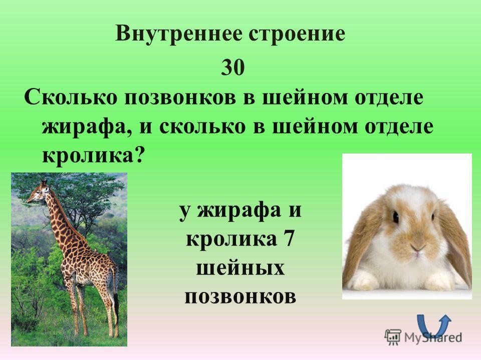 1 к какому типу и классу относятся насекомые?