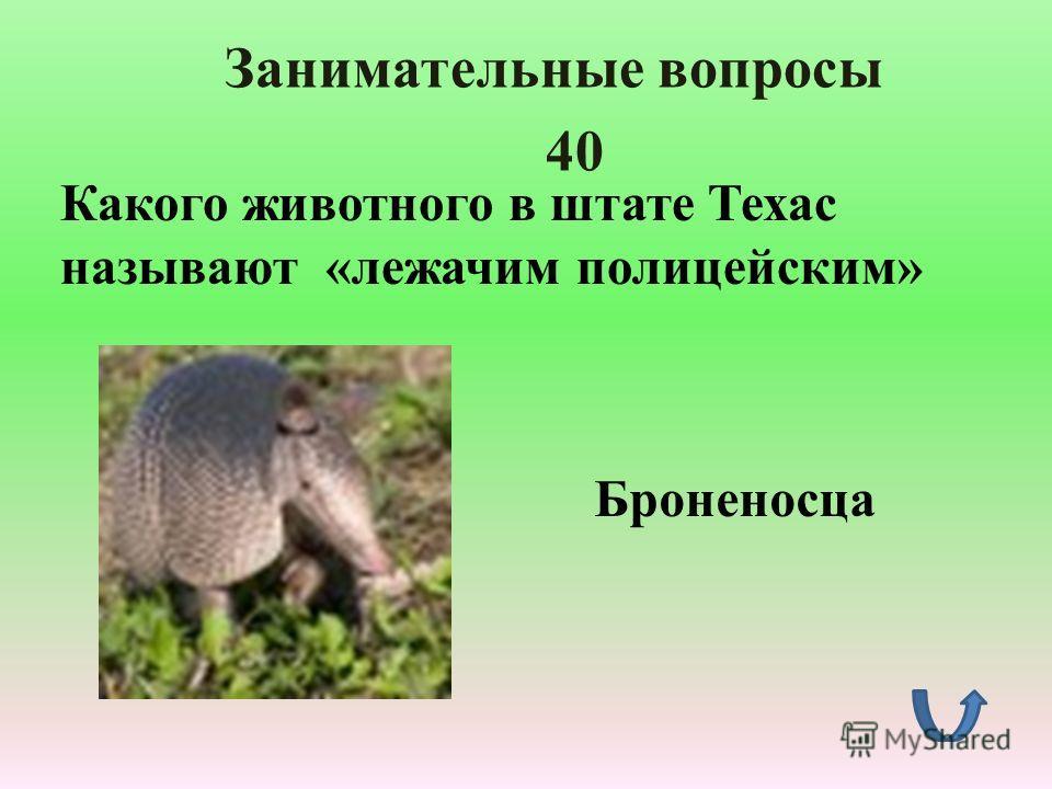 Занимательные вопросы 30 Это животное как и корова даёт молоко, с него стригут шерсть, как с овцы, хвост у него лошадиный, а хрюкает как свинья. О ком идёт речь? Як