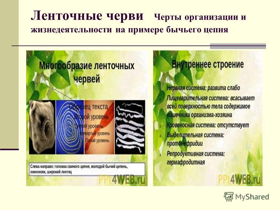 Ленточные черви Черты организации и жизнедеятельности на примере бычьего цепня