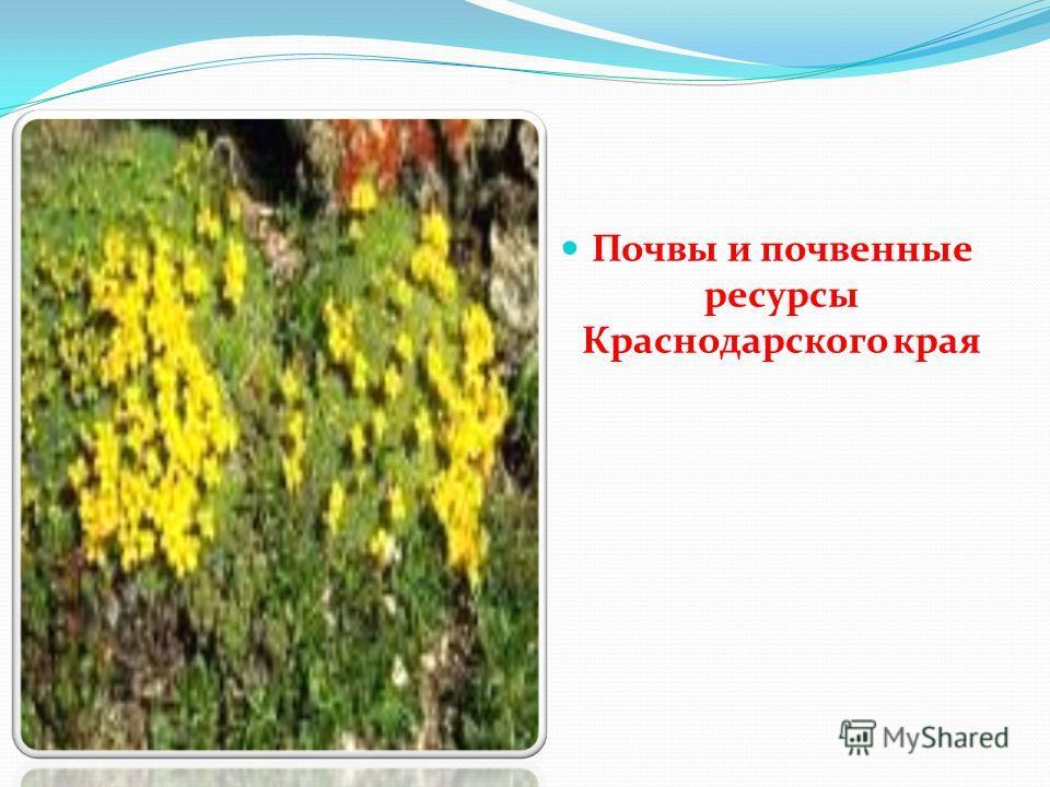 Почвы и почвенные ресурсы Краснодарского края