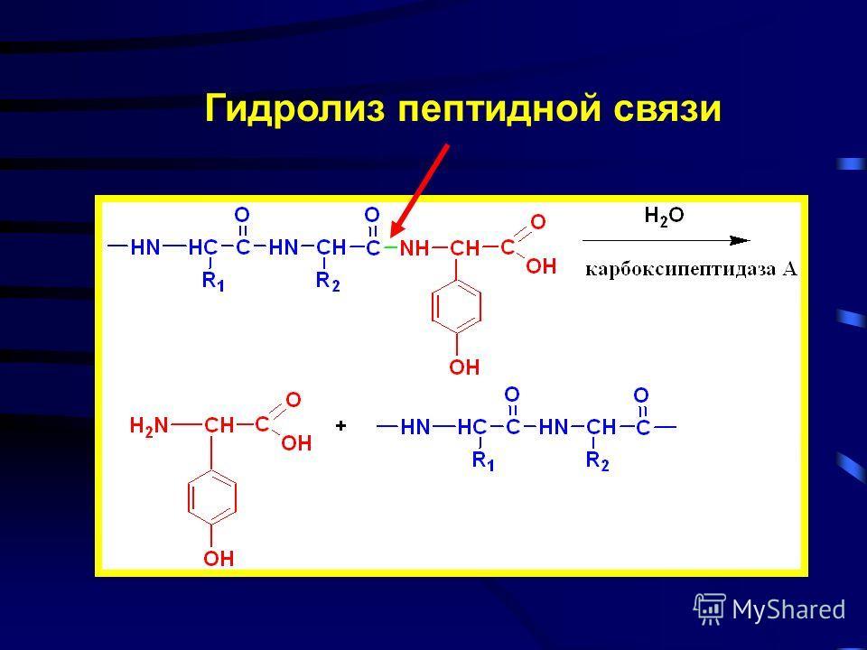 Специфичность действия ферментов группа связь группа А Б ББ Б В ВВ В ВВВВ Реакционная специфичность Субстратная специфичность А высокая высокая Б высокая низкая В низкая низкая 1 2 3 1 2 3