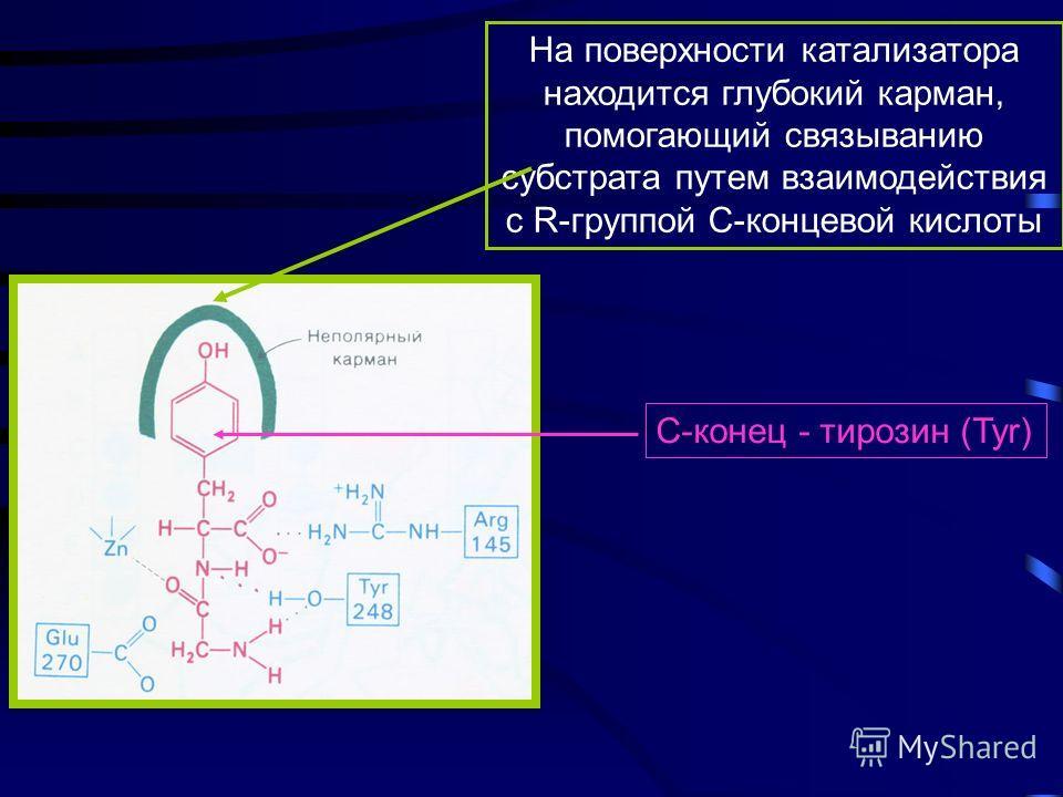 Механизм действия карбоксипептидазы A события в активном центре Общий кислотно-основной катализ Координационный катализ Ионное взаимодействие Неполярный карман