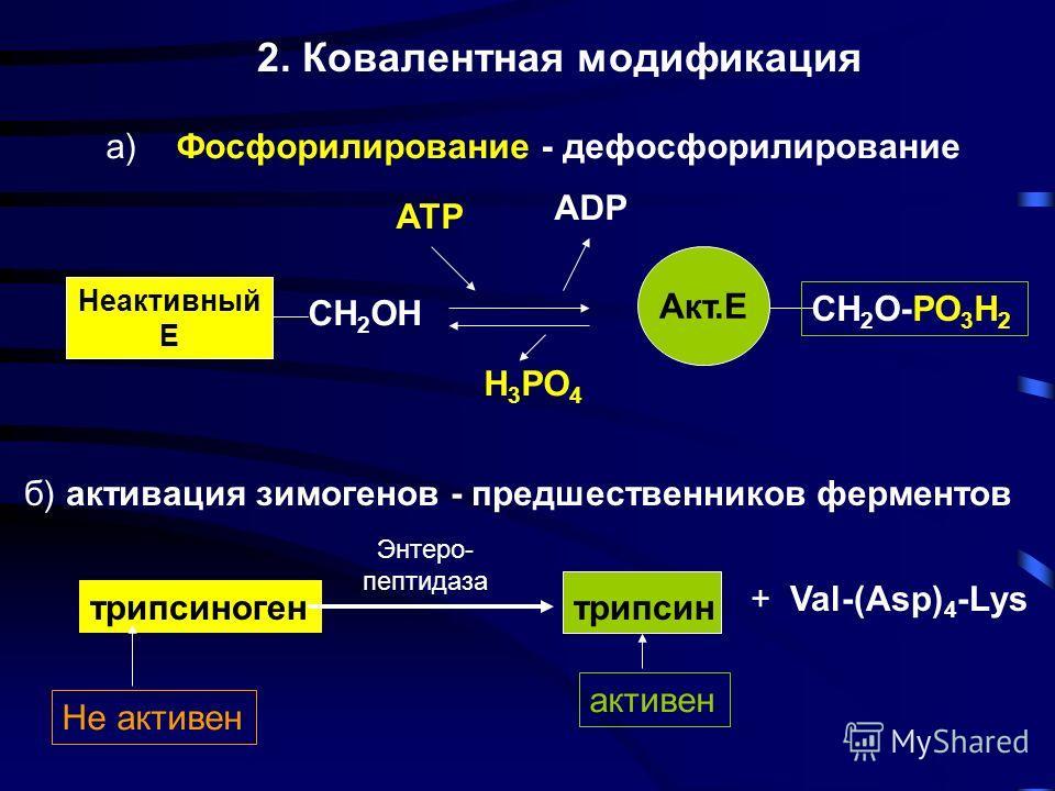 1. Аллостерическая регуляция эффектор Каталитическая субъединица с активным центром Неактивный фермент Регуляторная субъединица с аллостерическим центром Активный фермент S субстрат S ES-ферментсубстратный комплекс