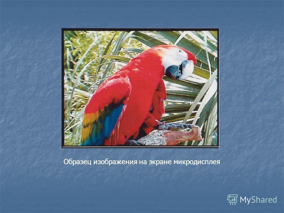 Образец изображения на экране микродисплея