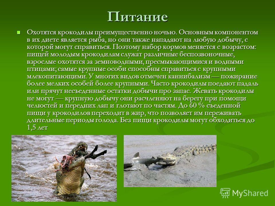 Питание Охотятся крокодилы преимущественно ночью. Основным компонентом в их диете является рыба, но они также нападают на любую добычу, с которой могут справиться. Поэтому набор кормов меняется с возрастом: пищей молодым крокодилам служат различные б