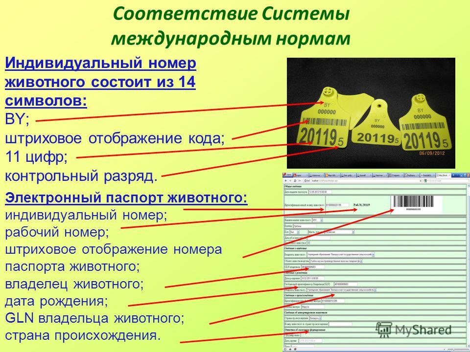 Соответствие Системы международным нормам Индивидуальный номер животного состоит из 14 символов: BY; штриховое отображение кода; 11 цифр; контрольный разряд. Электронный паспорт животного: индивидуальный номер; рабочий номер; штриховое отображение но