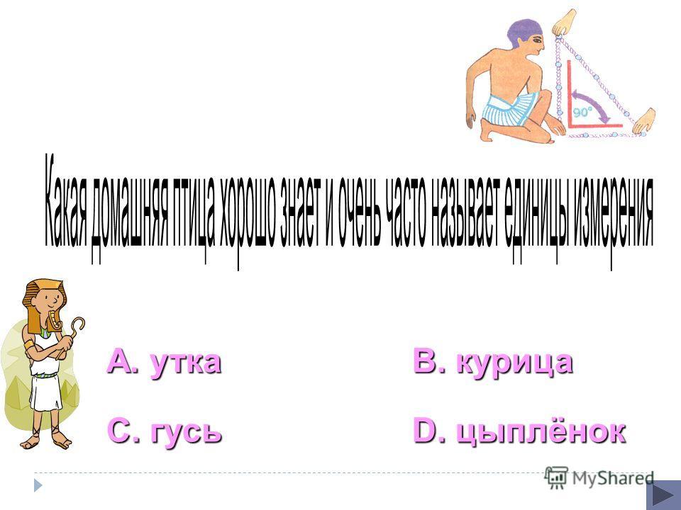 А. утка С. гусь В. курица D. цыплёнок