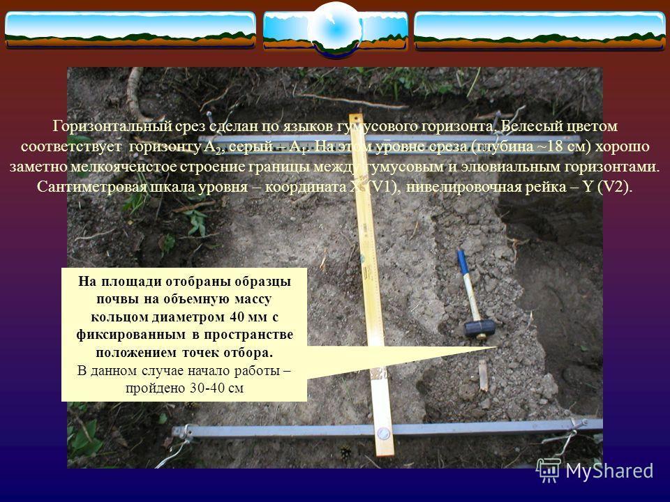 Рис. 7. Водосборные ячейки поверхности элювиального горизонта (A 2 ) Элементарные водосборные ячейки на поверхности горизонта A 2 (граница между горизонтами A 1 -A 2 ) являются элементами системы регуляции движения влаги в почве. Замкнутые вронкиобра