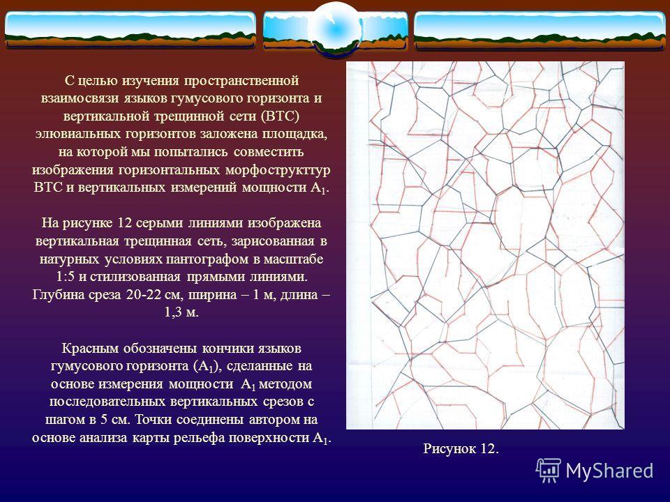 Рис. 11. Фрагмент (1 м) вертикального среза, отражающий взаимосвязь языков гумусового горизонта и ВТС, где границы морфоструктур зарисованы пантографом в масштабе 1:5, верх рисунка совмещен с горизонтальным уровнем (очерчены языки горизонтов)