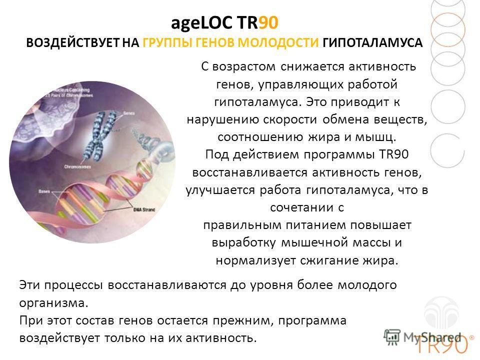 ageLOC TR90 ВОЗДЕЙСТВУЕТ НА ГРУППЫ ГЕНОВ МОЛОДОСТИ ГИПОТАЛАМУСА С возрастом снижается активность генов, управляющих работой гипоталамуса. Это приводит к нарушению скорости обмена веществ, соотношению жира и мышц. Под действием программы TR90 восстана