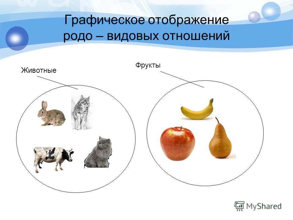 Графическое отображение родо – видовых отношений Животные Фрукты