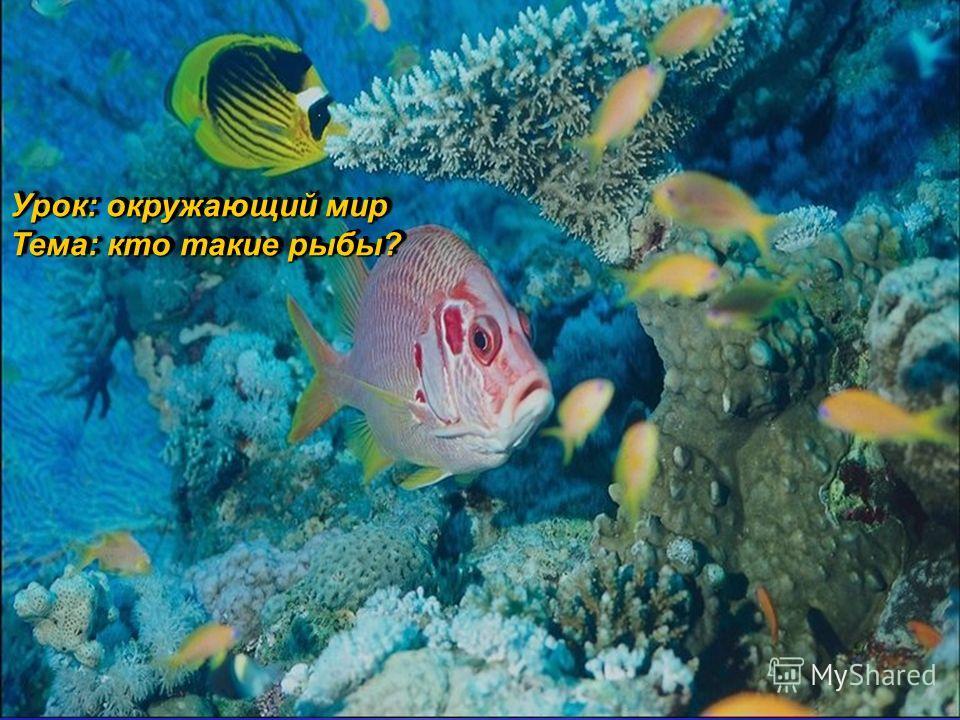 Урок: окружающий мир Тема: кто такие рыбы? Урок: окружающий мир Тема: кто такие рыбы?