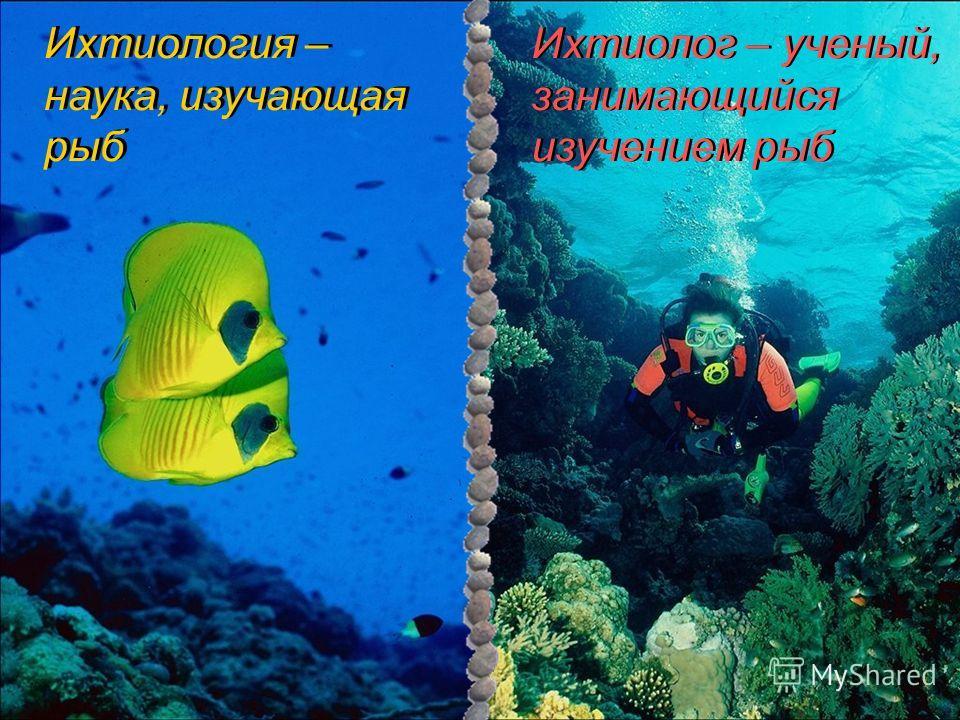 Ихтиология – наука, изучающая рыб Ихтиология – наука, изучающая рыб Ихтиолог – ученый, занимающийся изучением рыб Ихтиолог – ученый, занимающийся изучением рыб
