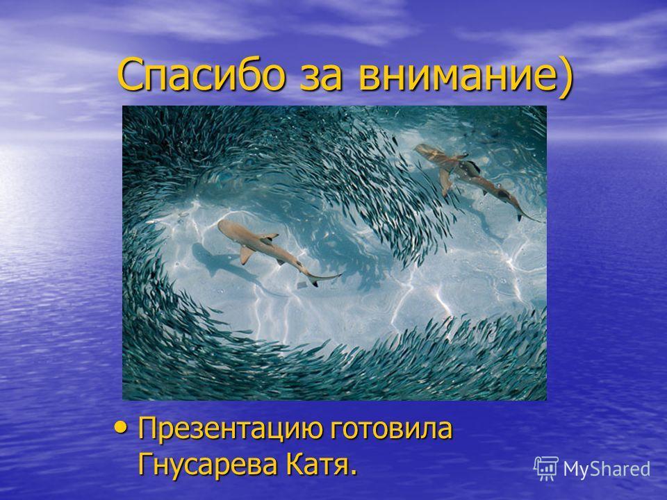 Спасибо за внимание) Спасибо за внимание) Презентацию готовила Гнусарева Катя. Презентацию готовила Гнусарева Катя.