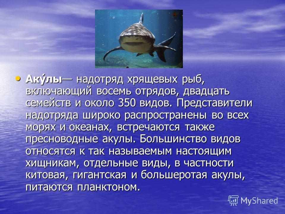Аку́лы надотряд хрящевых рыб, включающий восемь отрядов, двадцать семейств и около 350 видов. Представители надотряда широко распространены во всех морях и океанах, встречаются также пресноводные акулы. Большинство видов относятся к так называемым на