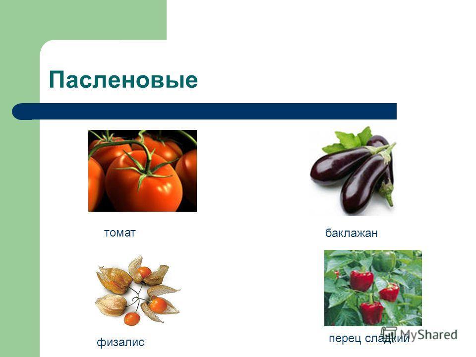 Пасленовые томат баклажан физалис перец сладкий