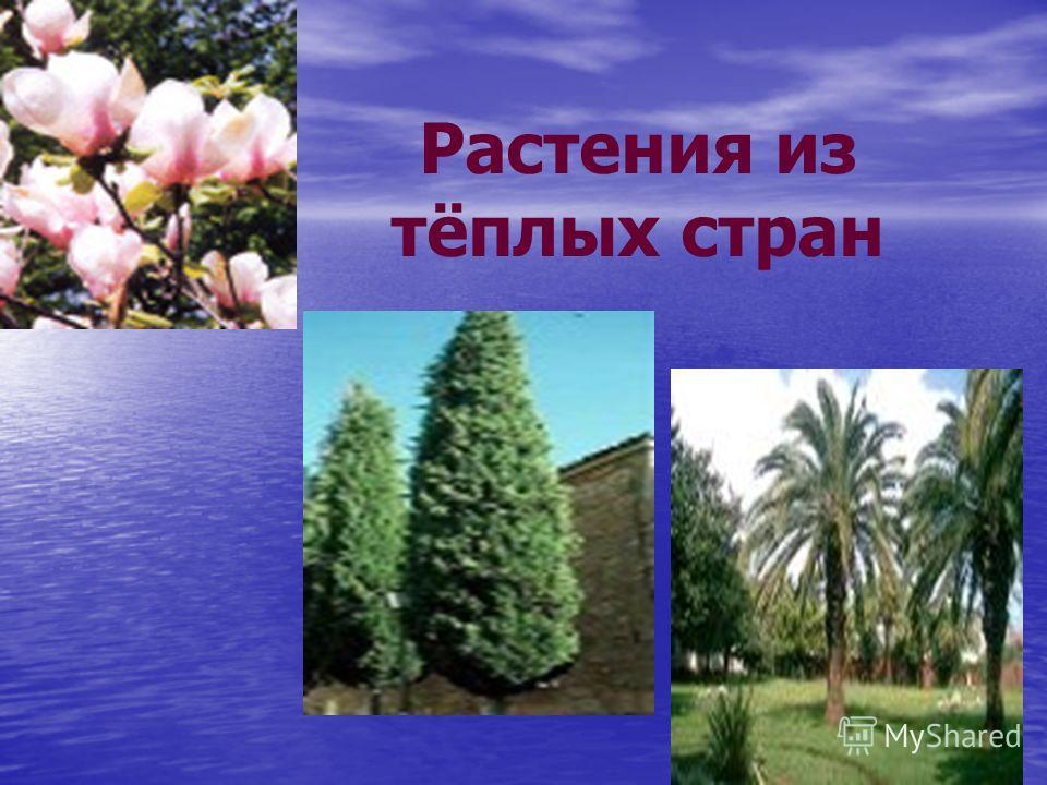 Растения из тёплых стран