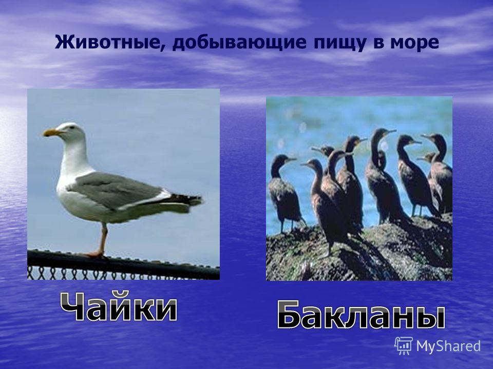 Животные, добывающие пищу в море