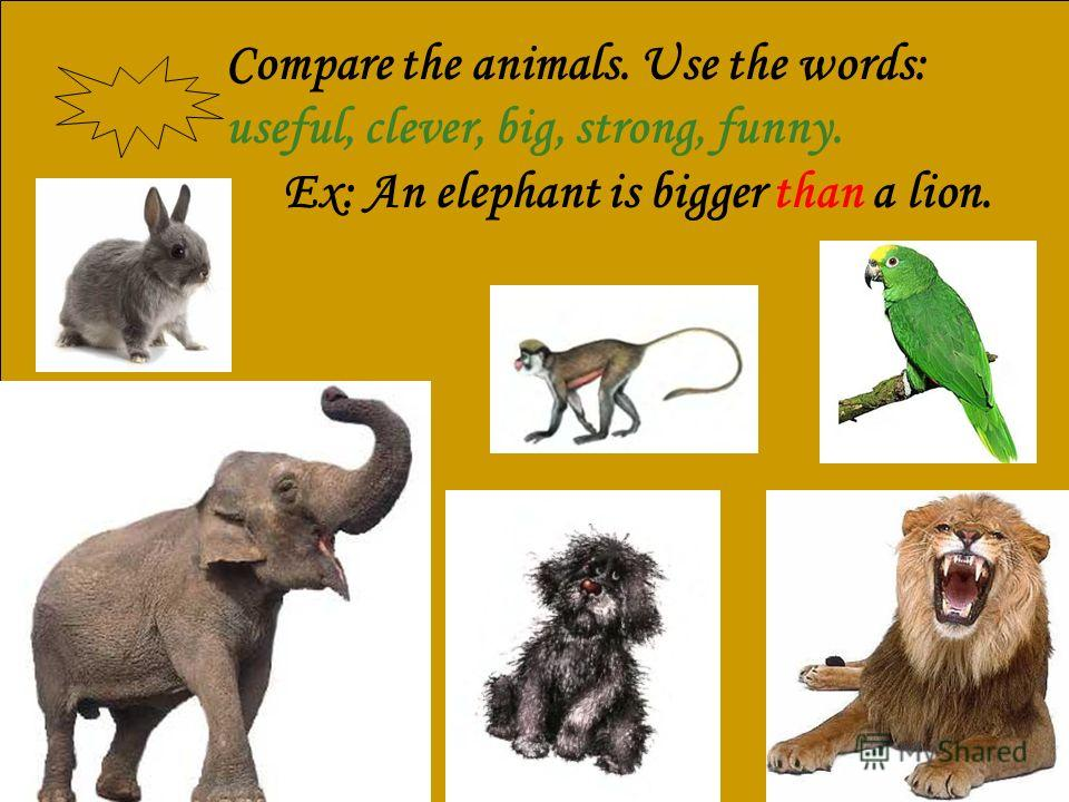 Compare the animals. Use the words: useful, clever, big, strong, funny. Ex: An elephant is bigger than a lion.