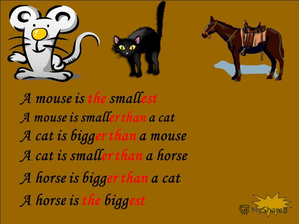 A mouse is the smallest A mouse is smaller than a cat A cat is bigger than a mouse A cat is smaller than a horse A horse is bigger than a cat A horse is the biggest