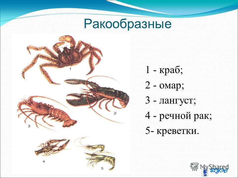Ракообразные 1 - краб; 2