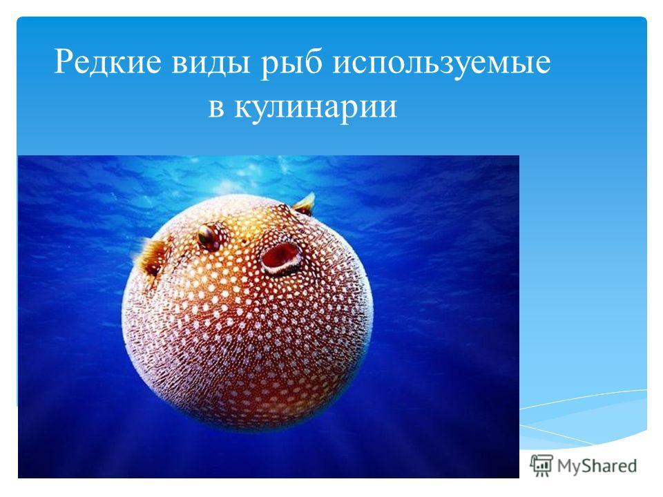 Редкие виды рыб используемые в кулинарии