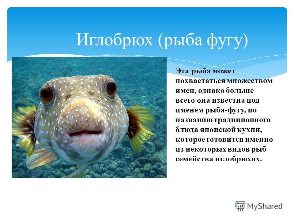 Иглобрюх (рыба фугу) Эта рыба может похвастаться множеством имен, однако больше всего она известна под именем рыба-фугу, по названию традиционного блюда японской кухни, которое готовится именно из некоторых видов рыб семейства иглобрюхих.