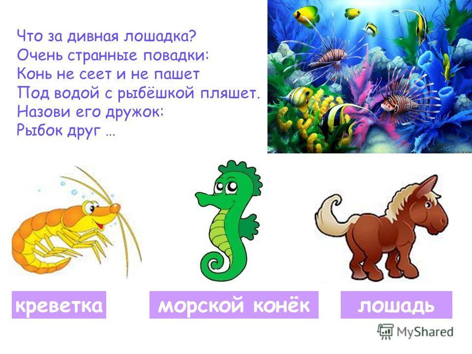Что за дивная лошадка? Очень странные повадки: Конь не сеет и не пашет Под водой с рыбёшкой пляшет. Назови его дружок: Рыбок друг … креветкаморской конёклошадь