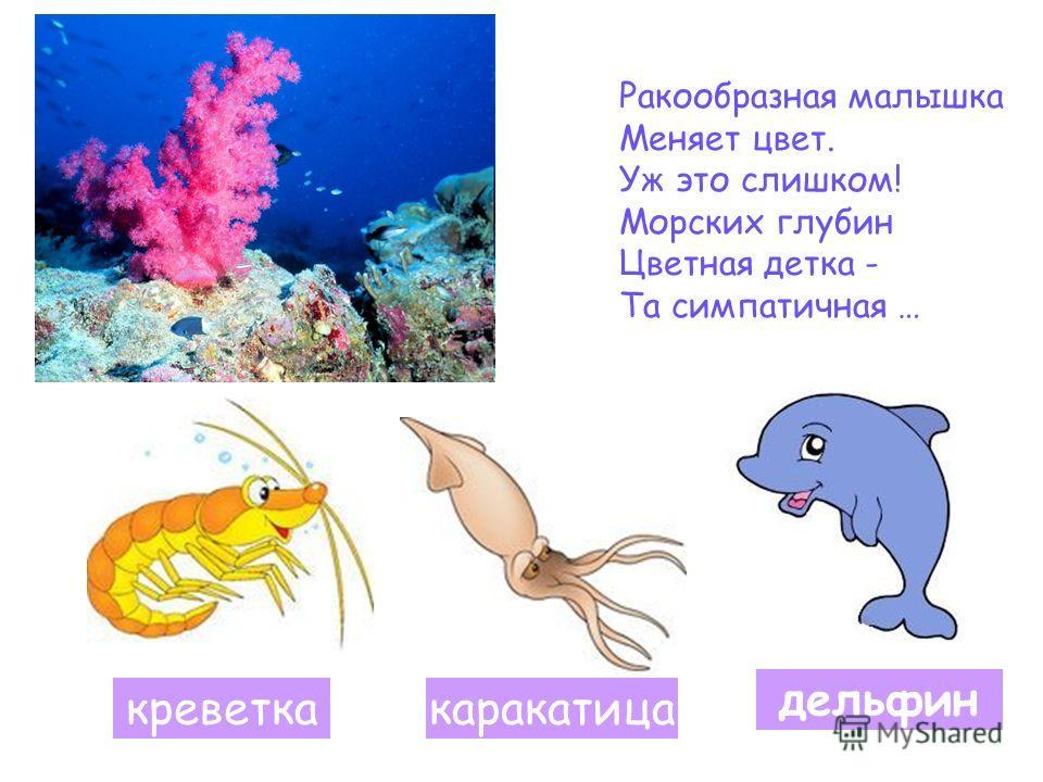 Ракообразная малышка Меняет цвет. Уж это слишком! Морских глубин Цветная детка - Та симпатичная … креветкакаракатица дельфин
