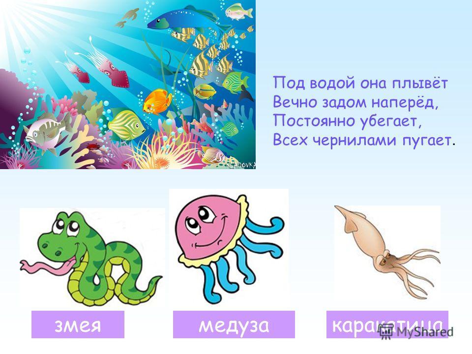 Под водой она плывёт Вечно задом наперёд, Постоянно убегает, Всех чернилами пугает. змеякаракатицамедуза